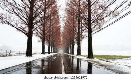 Metasequoia forest with white snow at the street (part7)