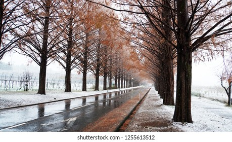 Metasequoia forest with white snow at the street (part8)