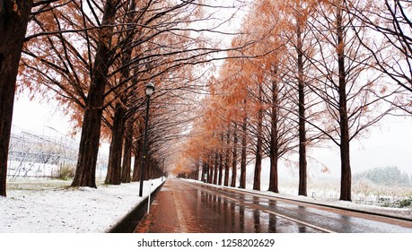Metasequoia forest with white snow at the street (part12)