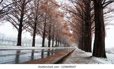 Metasequoia forest with white snow at the street (part18)