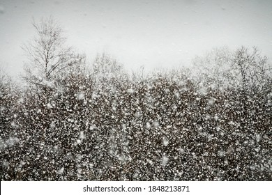 Meteorology, form of precipitation. Sleet (wet-snow precipitation, sleety showers, flurries), snowflakes sticking together- adhesion. Sheet of snow. Thick heavy snow is coming