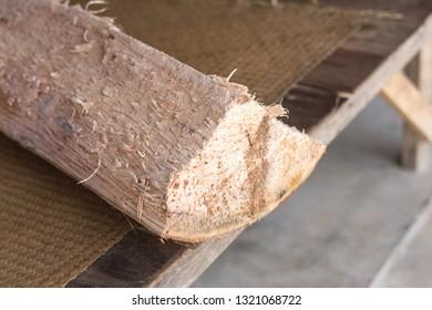 Metroxylon sagu palm tree cut befor make Sago Pearls Palm