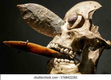 Mexica ornamental skull mask encrusted in nose and mouth with obsidian blades, like those used in human sacrifices. Mesoamerican rituals and postmortem treatment of bodies of the sacrificed