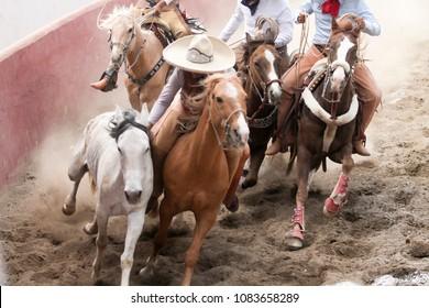 Mexican charros performing a dangerous horse stun