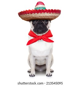 mexican dog with big sombrero hat and red tie