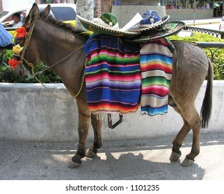 Mexican Donkey