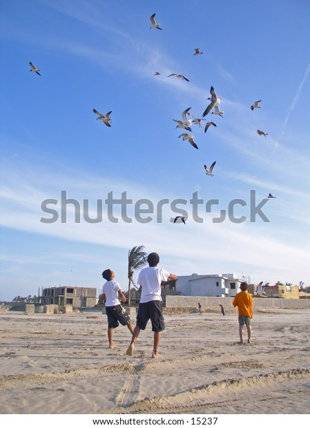 Mexican kids feeding and playing with seagulls