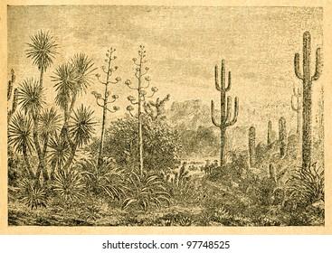 Mexican landscape - old illustration by unknown artist from Botanika Szkolna na Klasy Nizsze, author Jozef Rostafinski, published by W.L. Anczyc, Krakow and Warsaw, 1911 - Shutterstock ID 97748525