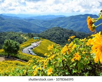 Mexican Sunflower at DOI Mae u Kho, Mae hong son, thailand