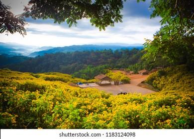 Mexican sunflower, Landscape Tung Bua Tong at Doi Hua Mae Kham in Chaing Rai, Thailand.