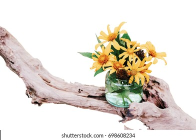 Mexican tournesol in a glass jar and dry branches isolate white background.