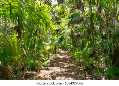 Mexican tropical rain forest in Riviera Maya at Xcacel beach