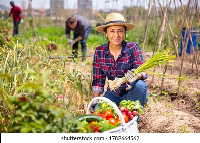 Mexican woman horticulturist picking harvest of garlic  in  garden