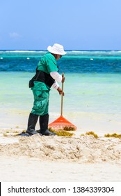 Mexican worker picking seaweed from sargassum on beaches of the Mayan Riviera, Playa del Carmen, Mexico, turquoise sea
