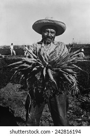 Mexican-American carrot puller in Edinburg, Texas. February 1939 photograph by Russell Lee.