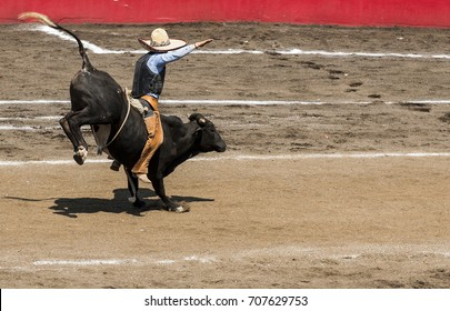 Mexico Charro Riding A Bull In Tradicional Dress