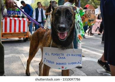 Mexico City, Mexico. 09/20/19: A dog wears a sign that says Our Planet is Our House in a demonstration. Strikes are being held all around the world for the Global Climate Strike.