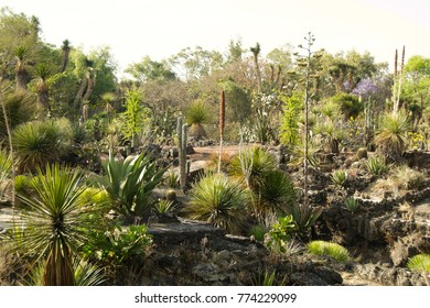 Mexico City, Mexico - 2017: Native plants at the UNAM botanical garden, Mexico City, Mexico