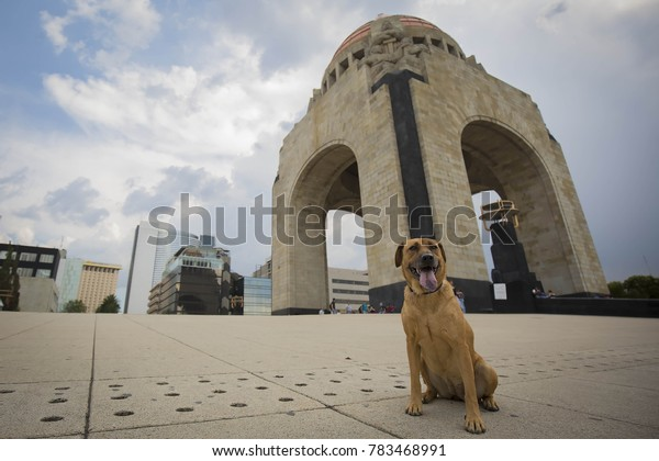 Mexico City, Mexico. July 07, 2016. Portrait of a dog in Mexico City, Mexico on July 2016