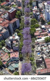 MEXICO CITY - March 16, 2015: aerial view of purple booming jacaranda trees in southern district Narvarte