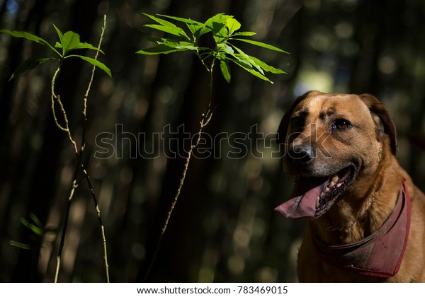 Mexico City, Mexico. November 09 2017. Portrait of a dog in the forest in Mexico City on November 2017