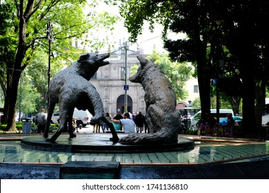 Coyoacán, Mexico City, Mexico - October 2019 : The famous drinking coyotes volcanic stone statue, the current logo of the borough in Coyoacán neighbourhood, Mexico City, Mexico.
