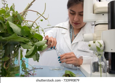 MEXICO, MEXICO CITY October the 3rd 2017, Young botanist at work, preparing fresh plant sample and examining specimen for further analysis
