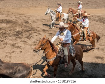 Mexico, Guadalajara - 12 February 2017: charros on horseback in traditional dress in a field working with cattle