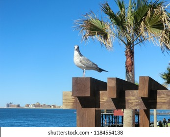 Mexico, Sonora, Rocky Point, Puerto Penasco, Hotels on Gulf of California with seagull in forefront