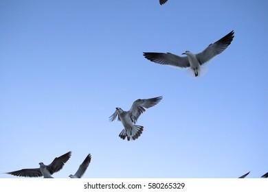 miami beach birds