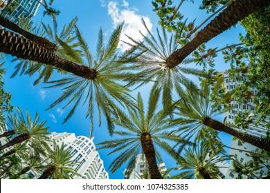 Miami Beach cityscape with palm trees and art deco architecture.