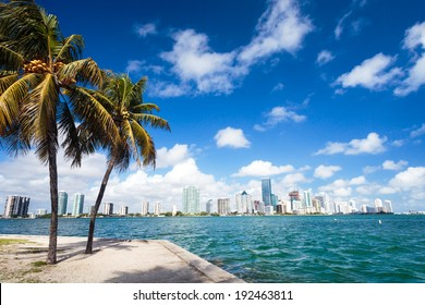 MIami Downtown Business Area,with palm tree on the side - Florida ,United States