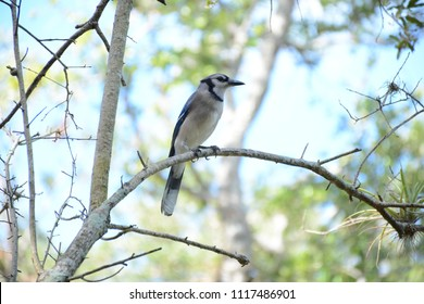 Miami, FL, USA - DECEMBER 4, 2017: Bird on the tree in Greynolds Park and Golf course located in North part of Miami, Florida