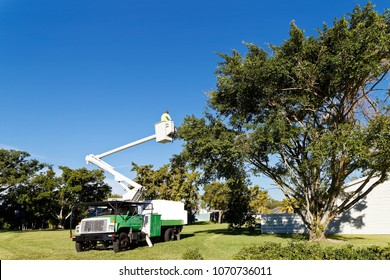 Miami, FLORIDA – January 05, 2018:  An arborist trimming a tree to protect the tree and its surroundings from high winds during the hurricane season. The hurricane season runs from June to November