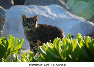 Miami, Florida - January, 4, 2018: Cat sitting near the rock at Haulover Beach Park in Florida