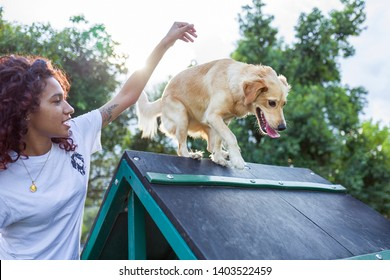 MIAMI, FLORIDA - JULY 14,2018: A female dog trainer teaches a labrador dog behavioral goals techniques and to climb over an a-frame at an obstacle park facility for pets at Tropical Park