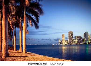 Miami Florida night scene with buildings, bay and palm trees