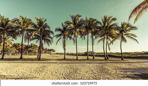Miami South Beach park with palms, Florida