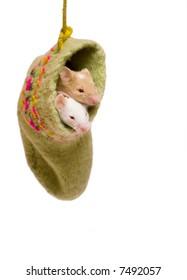 Mice in the sock