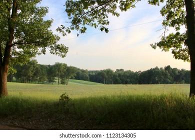 Michigan Field in Summer