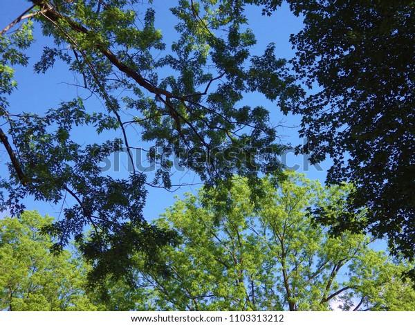 Michigan Tree Tops