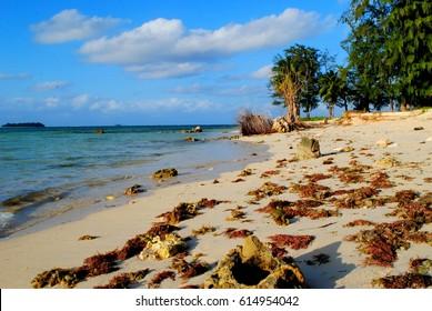 Micro Beach, Saipan Seaweeds washed up on the white sand shores of  Micro Beach in Garapan, Saipan. In view is Managaha Island.