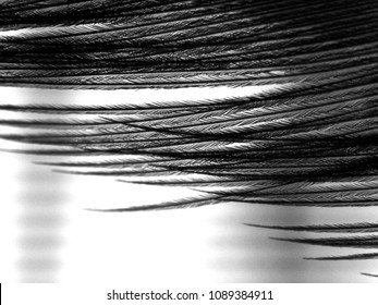 Micro detail of a pheasant feather.