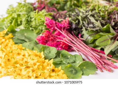Micro greens and fresh salad ingredients and garnish on white background. Greens include red amaranth, nasturtium leaf, lemon marigold, red veined sorrel, mizuna and mixed baby greens.