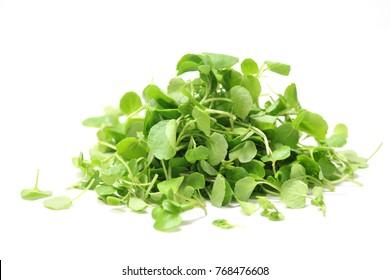 Micro watercress herb