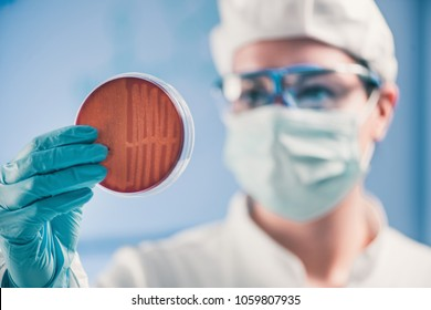 Microbiologist inspecting petri dish, observing bacteria growth