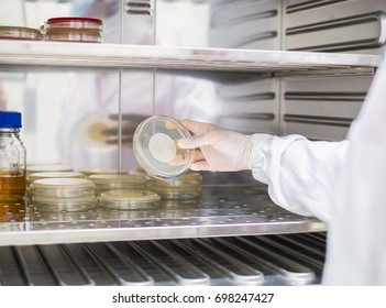 Microbiologist observe the growth of microorganism on the membrane agar plate, in the background of incubator with agar medium and broth, concept of qc laboratory of pharmaceutical industry.