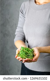 microgreen arugula sprouts in female hands Raw sprouts, microgreens, healthy eating concept copy space