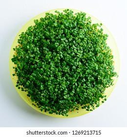 microgreen arugula sprouts in a plate on a light background Raw sprouts, microgreens, healthy eating concept