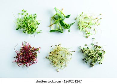 microgreen dill sprouts, radishes, mustard, arugula, mustard in the range on a light background, copy space